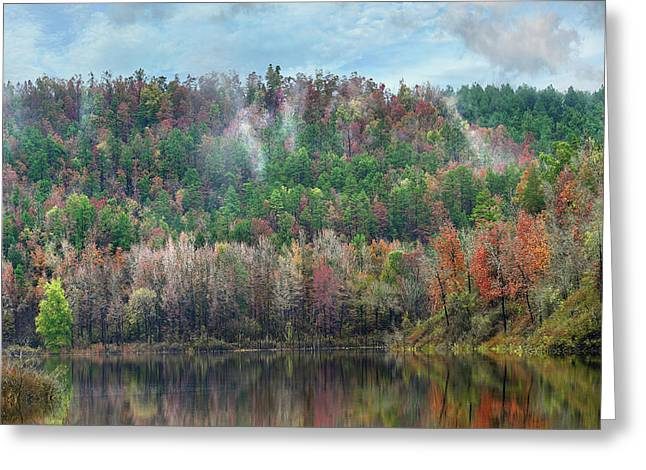 Hickory Forest Greeting Card by Tim Fitzharris
