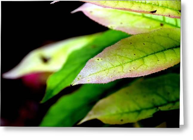 Hickory Leaf Greeting Card