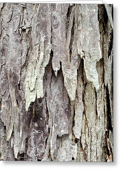 Greeting Card featuring the photograph Hickory Tree Bark Abstract by Christina Rollo
