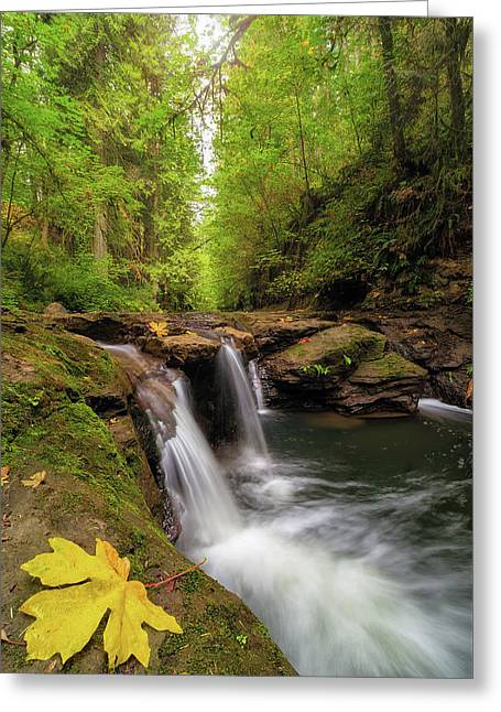 Hidden Falls At Rock Creek Greeting Card by David Gn