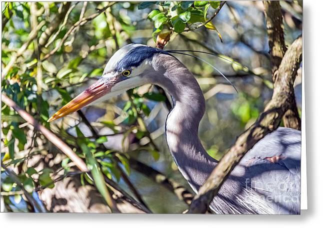 Hidden Heron Greeting Card by Kate Brown