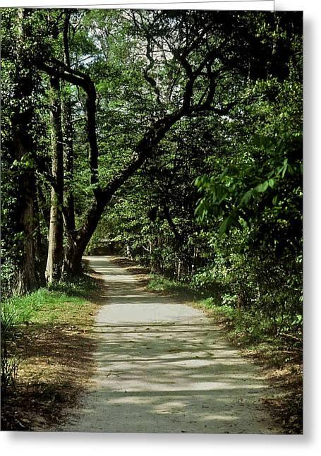 Hidden Path Greeting Card