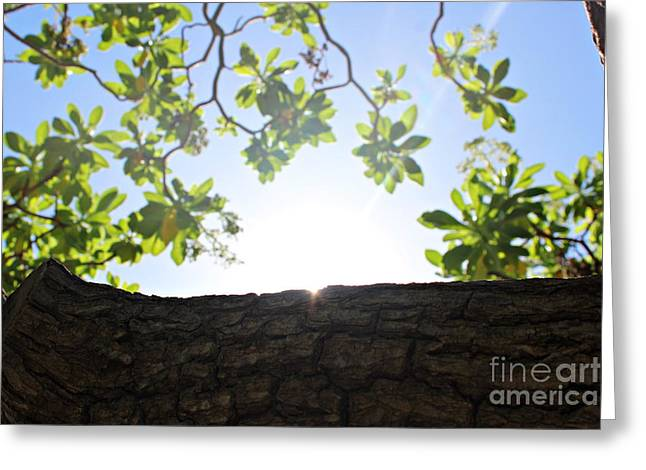 Greeting Card featuring the photograph Hide And Seek by Cendrine Marrouat