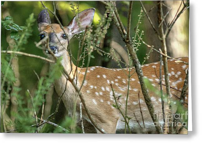 Hiding Fawn Greeting Card