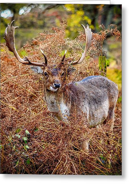 Hiding In The Bracken Greeting Card