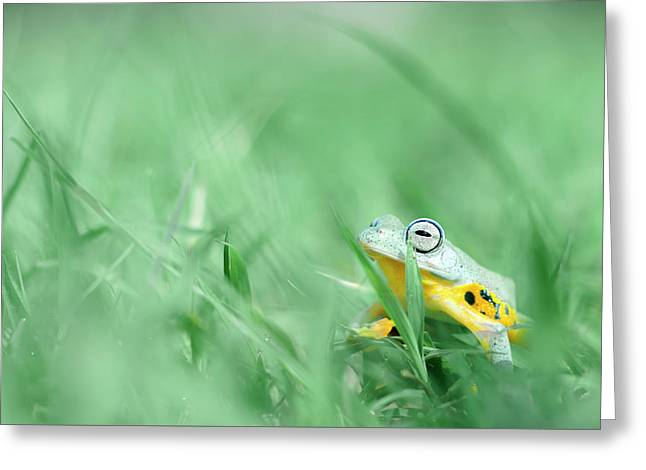 Hiding In The Grass Greeting Card by Robert Cinega