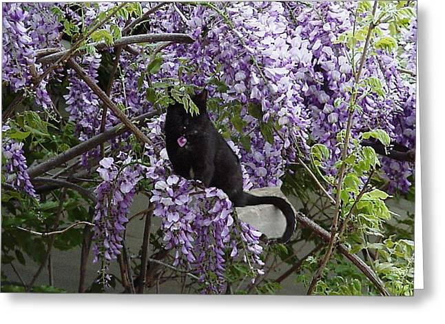 Hiding In The Wisteria Greeting Card by Carole Boyd
