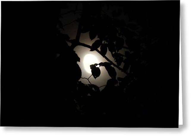 Greeting Card featuring the photograph Hiding - Leaves Over Moon by Menega Sabidussi
