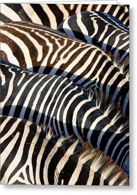 High Angle View Of Burchells Zebras Greeting Card