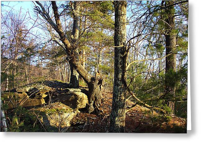 High Atop White's Road Solitude Is Met By Dawn Greeting Card by Terrance DePietro