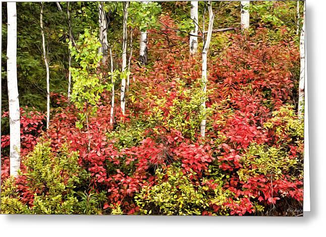 High Bush Cranberry And Aspens Greeting Card