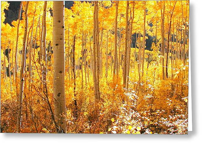 High Country Gold Greeting Card by The Forests Edge Photography - Diane Sandoval
