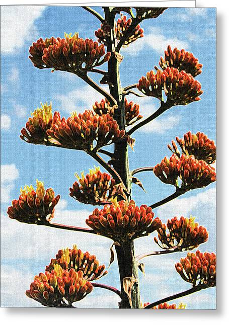 High Country Red Bud Agave Greeting Card