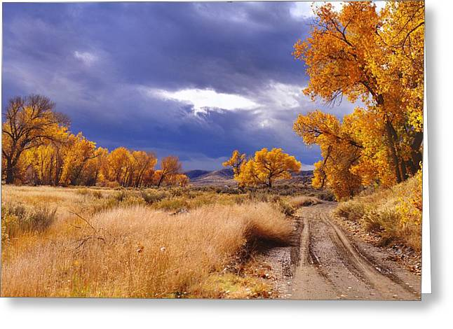 High Desert Autumn II Greeting Card by SB Sullivan