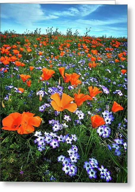 High Desert Wildflowers Greeting Card