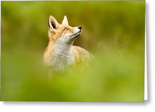 High Hopes - Red Fox Looking Up Greeting Card by Roeselien Raimond