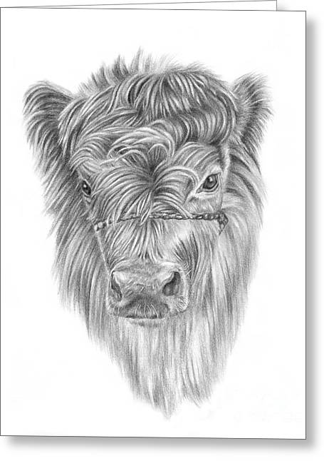 Highland Calf Greeting Card