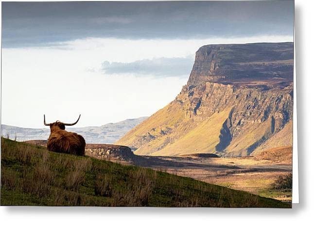 Highland Coo With A View Greeting Card