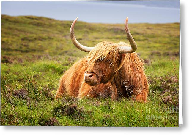 Highland Cow Greeting Card by Jane Rix