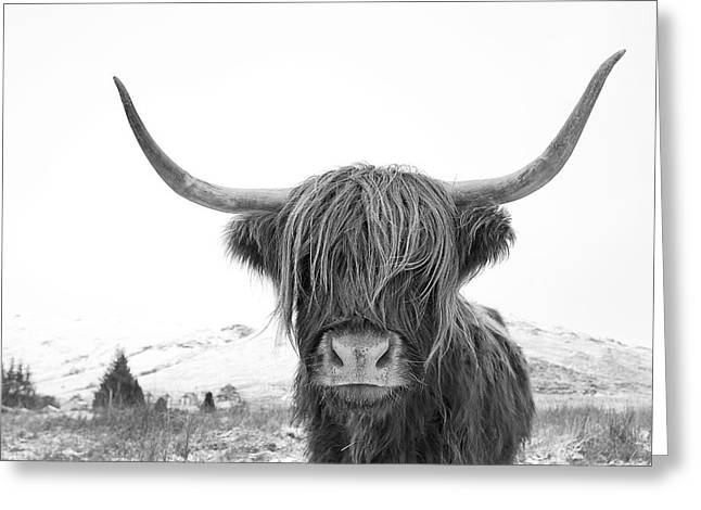 Highland Cow Mono Greeting Card