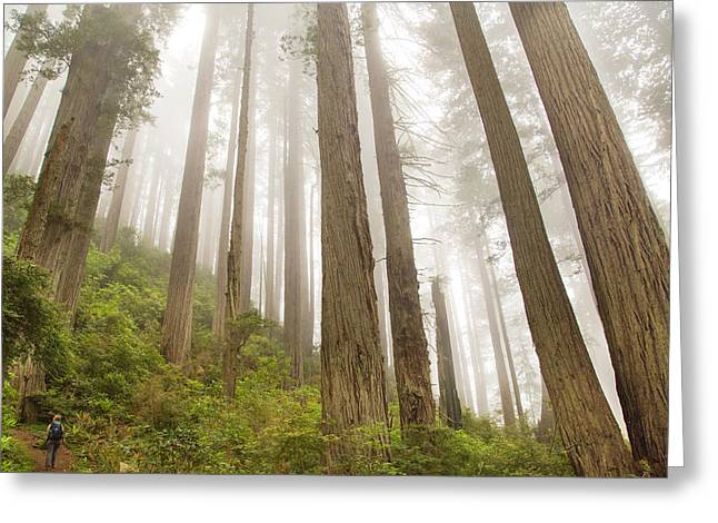 Hike Through The Redwoods Greeting Card by Kunal Mehra