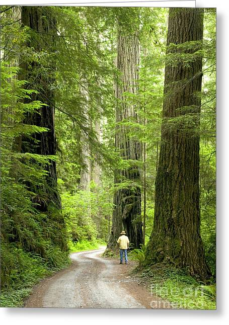 Hiker On A Road Through Redwoods Greeting Card by Inga Spence