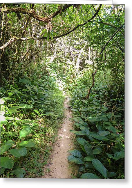 Hiking Path In The Atlantic Forest Greeting Card