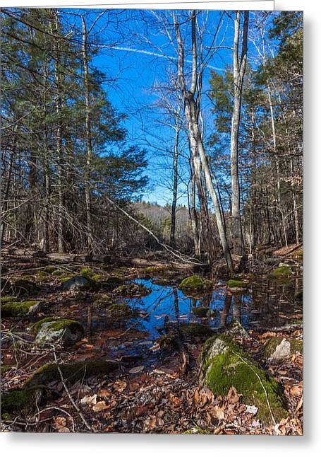 Hiking Reflections At Wompatuck State Park Greeting Card