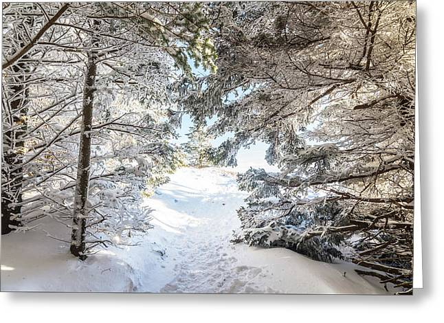 Hiking Through A Snow Covered Forest Greeting Card by Serge Skiba