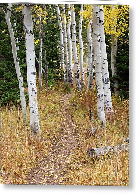 Hiking Trail In Autumn Aspens Greeting Card by Mike Cavaroc