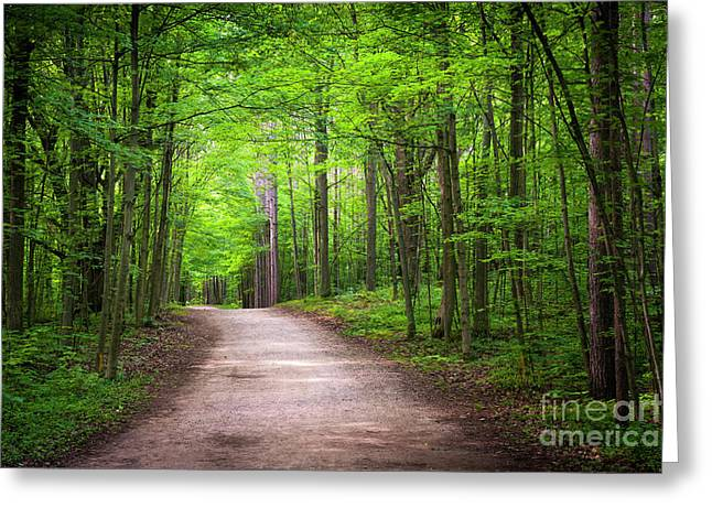Hiking Trail In Green Forest Greeting Card