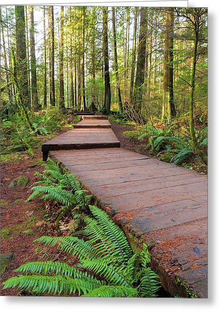 Hiking Trail Wood Walkway In Lynn Canyon Park Greeting Card