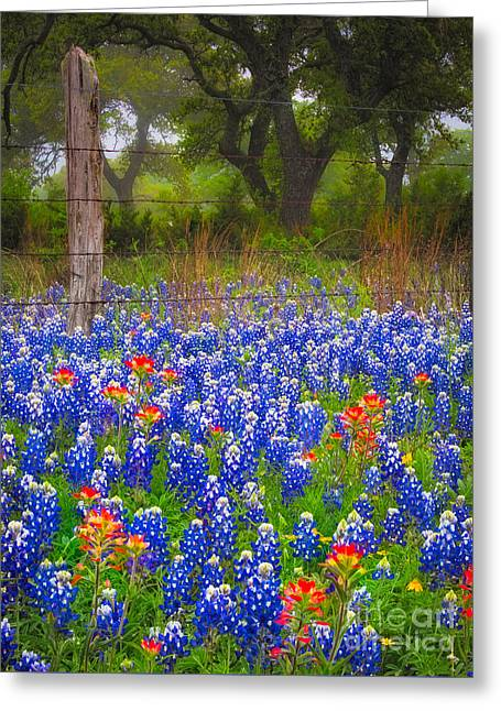 Hill Country Forest Greeting Card