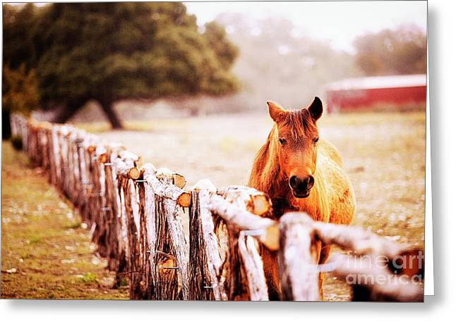 Hill Country Horse Greeting Card by Katya Horner