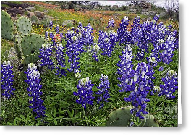 Hill Country Palette Greeting Card