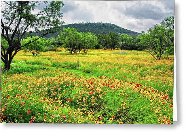 Hill Country Wildflowers Greeting Card