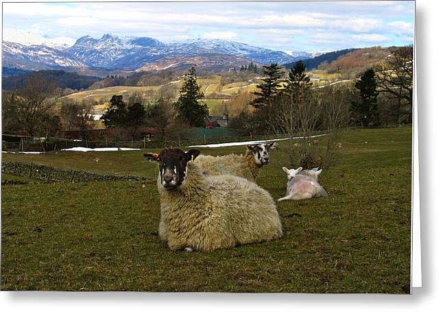 Hill Sheep Greeting Card by RKAB Works