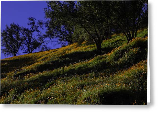 Hill Side Poppies Greeting Card
