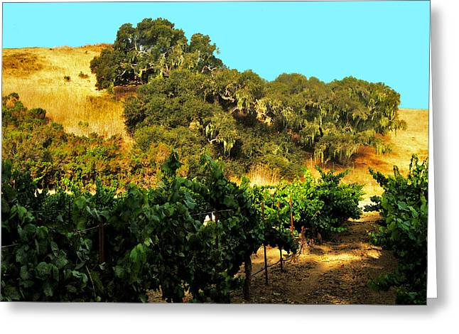 hill side vineyard 'n Oaks Greeting Card