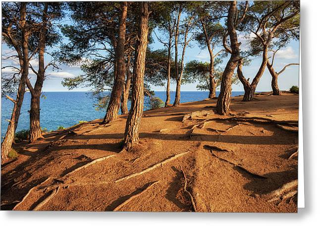 Hill Top Sunset By The Sea Greeting Card by Artur Bogacki