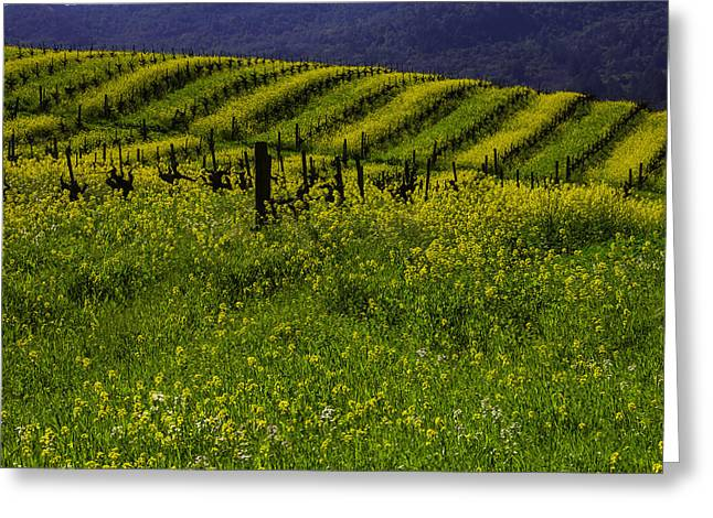 Hills Of Mustard Grass Greeting Card
