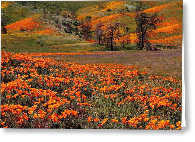 Hills Of Orange Near Antelope Valley Poppy Preserve In California Greeting Card
