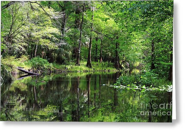 Hillsborough River Vista Greeting Card