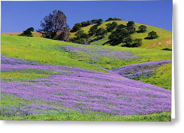 Hillside Carpet Greeting Card by Josephine Buschman