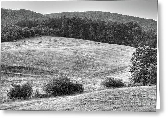 Hillside Hay Greeting Card by Pete Hellmann