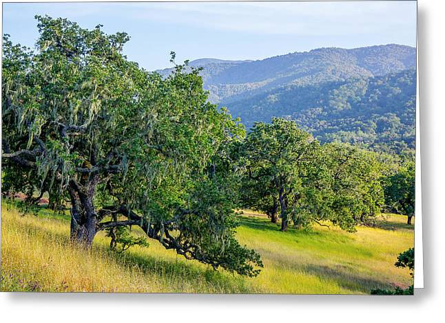Hillside Oaks Greeting Card