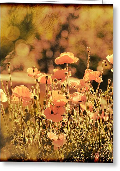 Hillside Poppies And Sunset Greeting Card