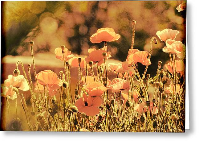 Greeting Card featuring the painting Hillside Poppies And Sunset by Douglas MooreZart