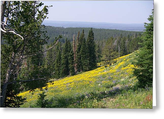 Hillside Wildflowers Greeting Card