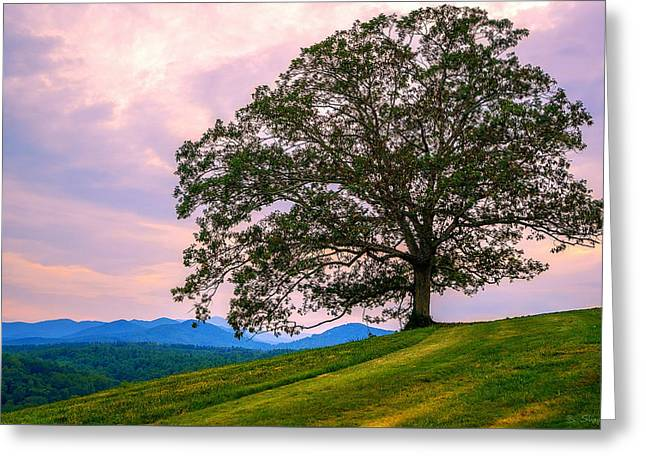 Hilltop Oak Greeting Card